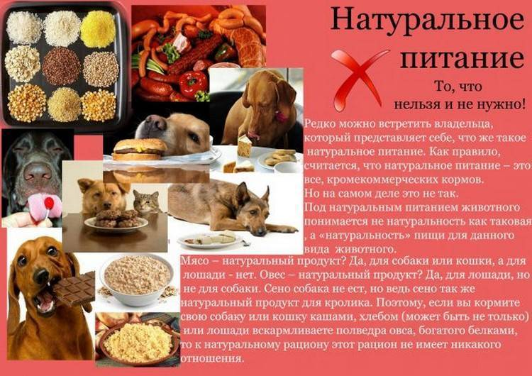 Ветеринарно-санитарные нормы и требования к качеству кормов для непродуктивных животных
