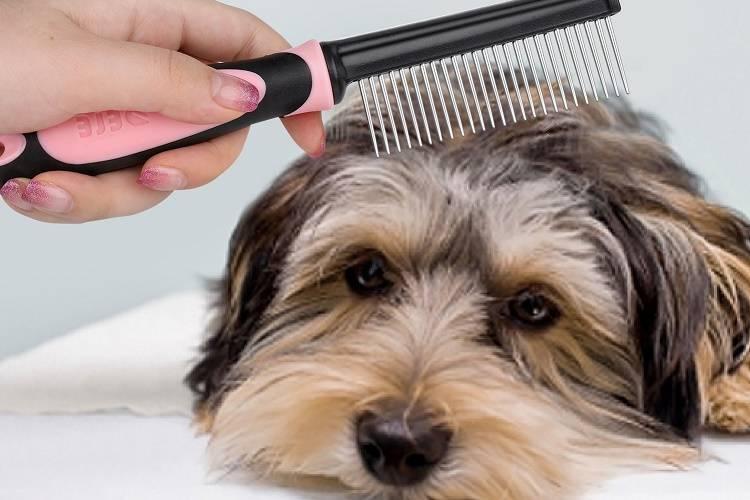 Причины и лечение алопеции у собак