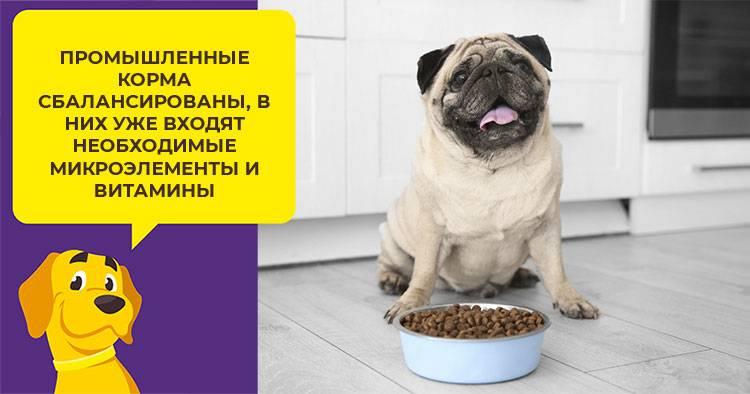 Собака. содержание, уход, кормление собак.