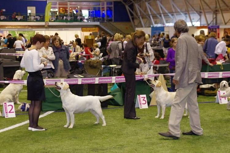 Всё о самой престижной выставке в мире - crufts | мастерская собак | яндекс дзен