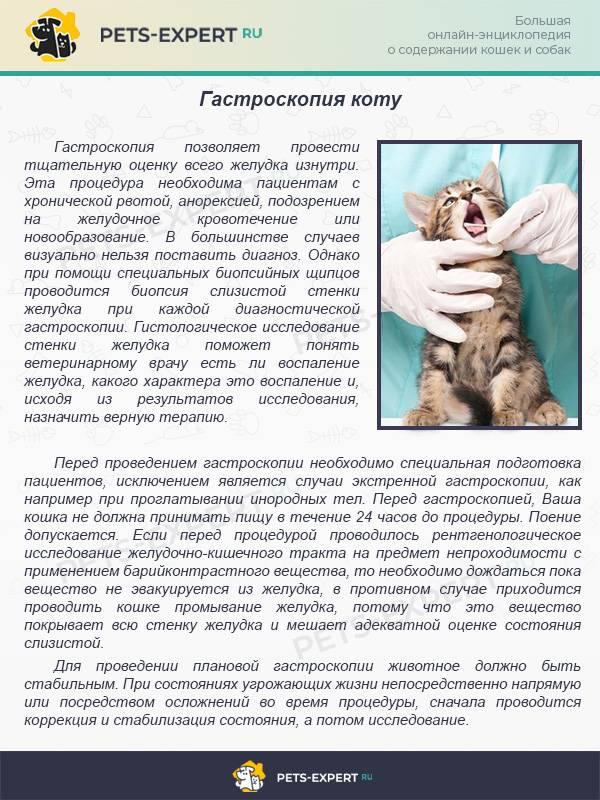 Запор у кошек - симптомы, причины, лечение в домашних условиях и у специалистов