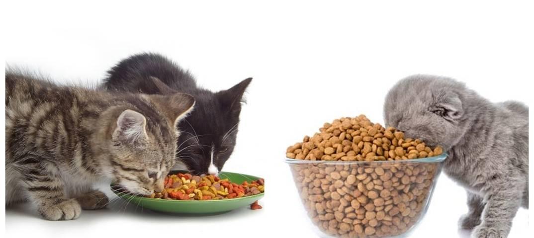Особенности кормления кошек лечебным кормом