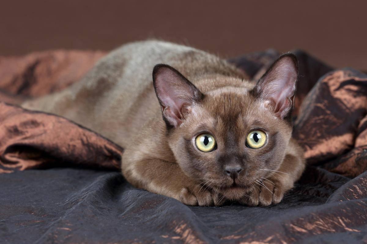 Популярные породы кошек: фото и названия