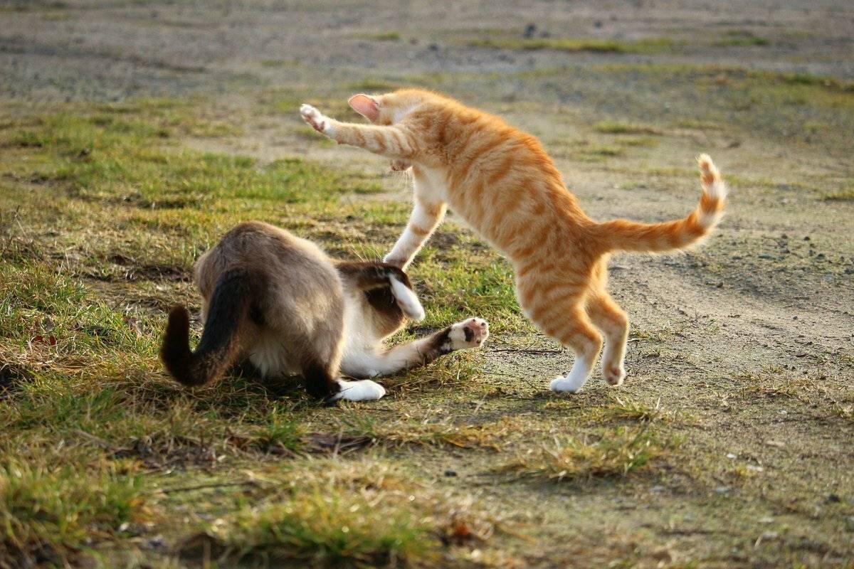 Как кошки воспринимают людей? почему кошки мнут лапами человека - psychbook.ru