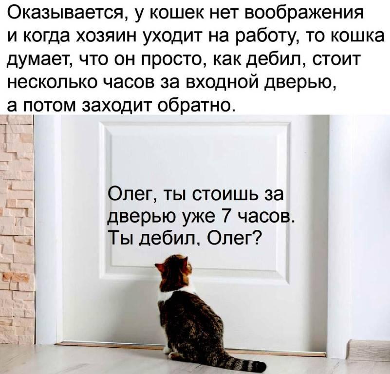О чем думают кошки? счастливый кот — la-murmur.ru