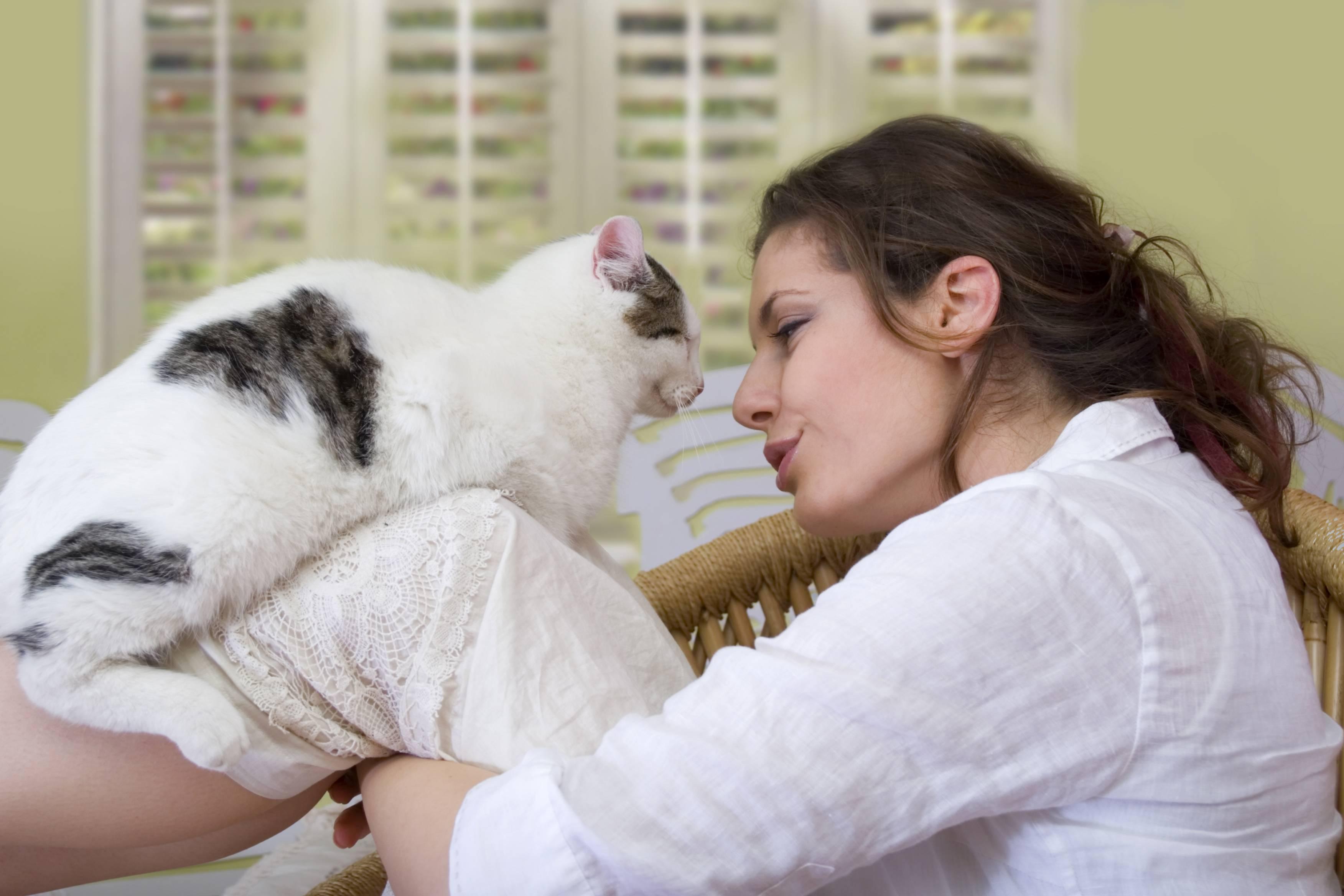 """Почему кошки откликаются на """"кис-кис"""" - gafki.ru"""