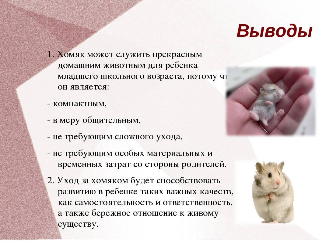 Характеристика породы «мопс»: особенности животных и отзывы владельцев