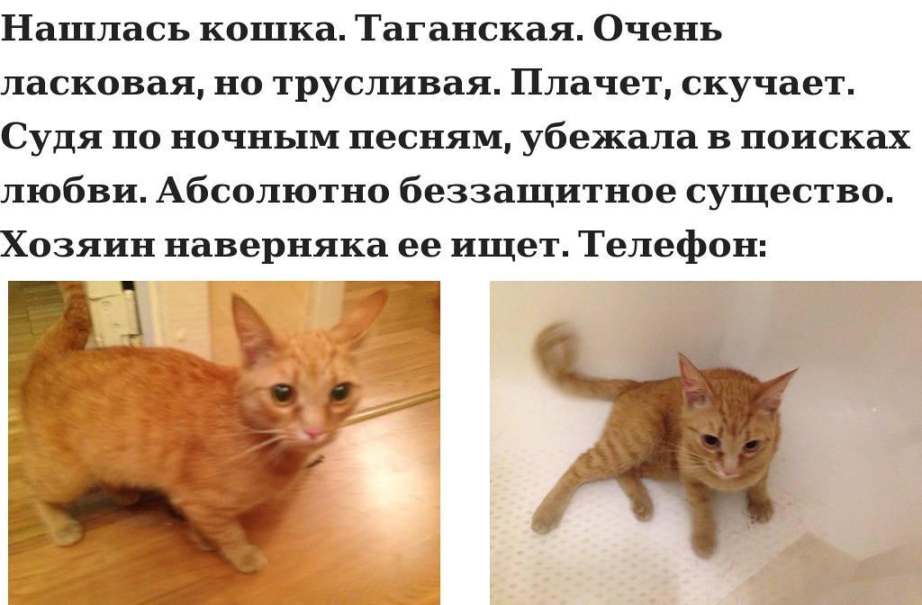 Можно ли оставлять кошку одну дома. на сколько дней можно оставить кошку дома одну: советы опытных кошатников