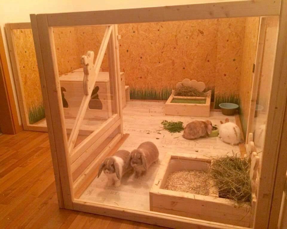 Клетки для декоративных кроликов: виды и советы по изготовлению и обустройству