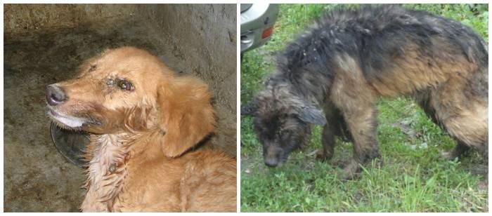 Признаки бешенства у человека после укуса собаки – лечение и профилактика