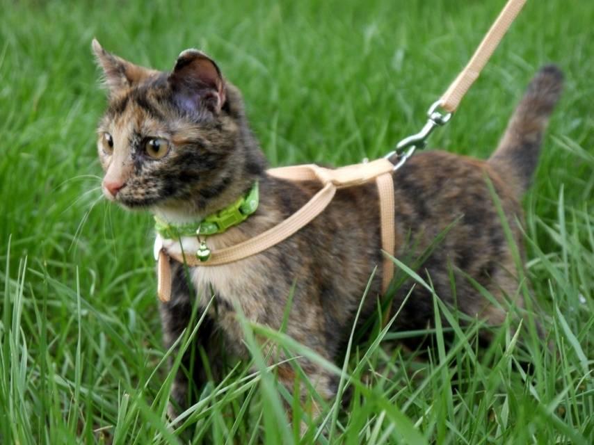 Разновидности ошейников для кошки: какие существуют и как выбрать