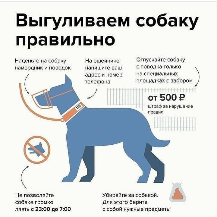Какие породы собак должны выгуливаться в наморднике
