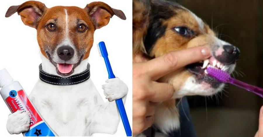 Как чистить зубы собаке в домашних условиях: пошаговые рекомендации