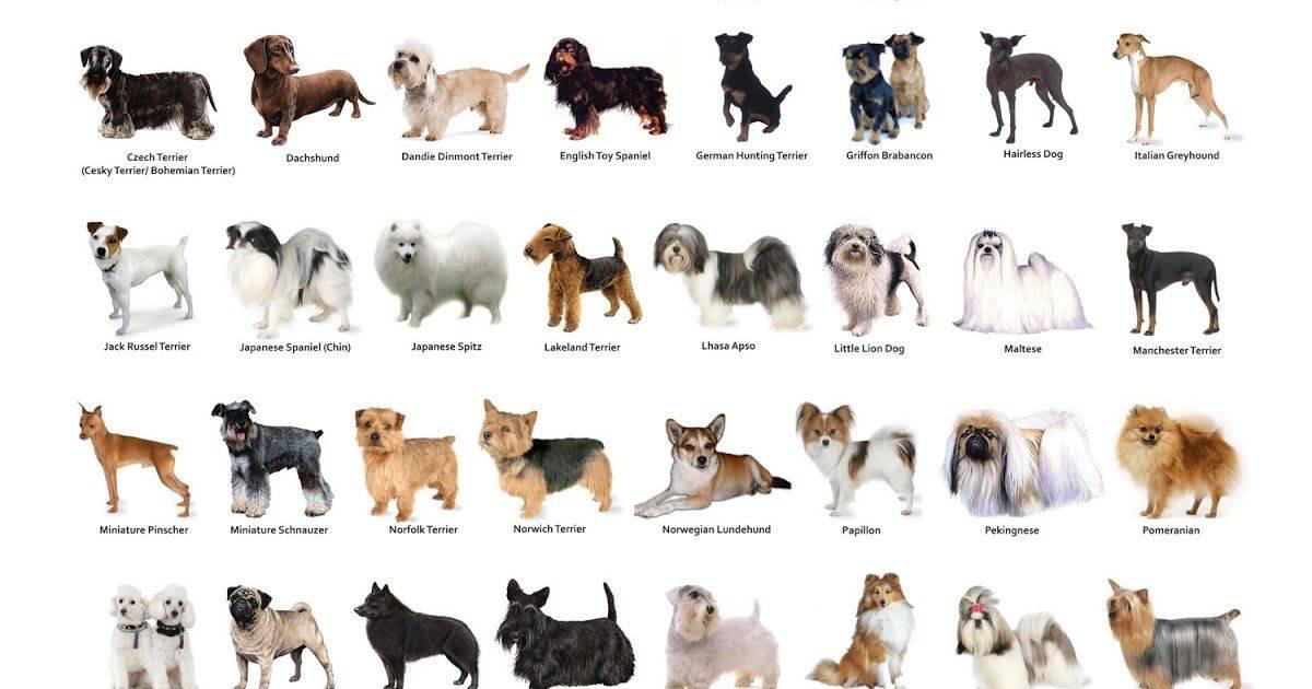 Породы собак - полный список пород собак с фото. породы собак по алфавиту