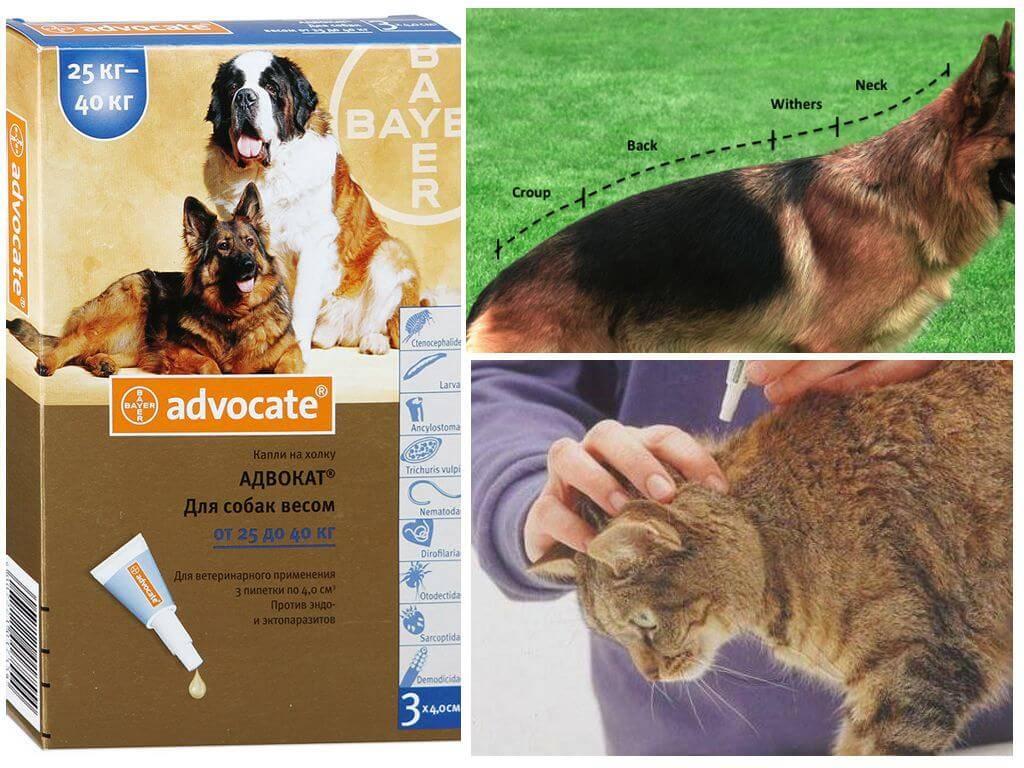 «адвокат» для кошек: инструкция по применению