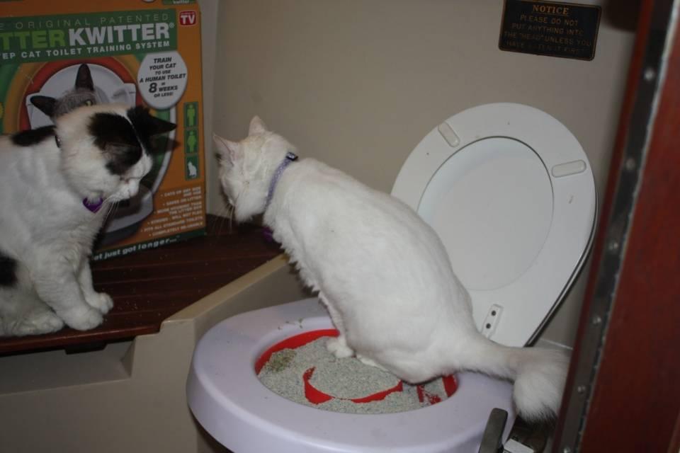 Неприятный запах от кошки: причины и методы устранения