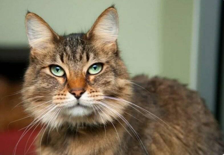 Пожилая кошка: особенности ухода