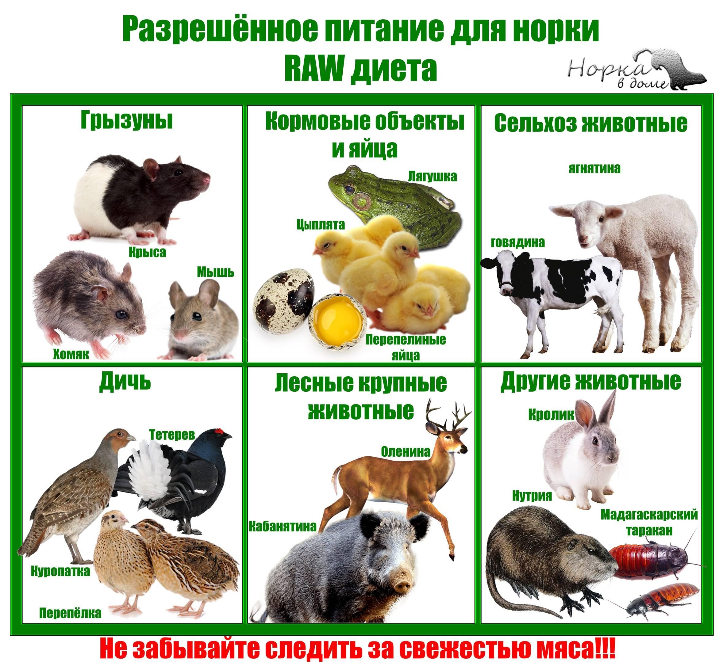 Дикие домашние животные: плюсы и минусы содержания хищных животных дома в качестве питомца. кого можно держать в домашних условиях?