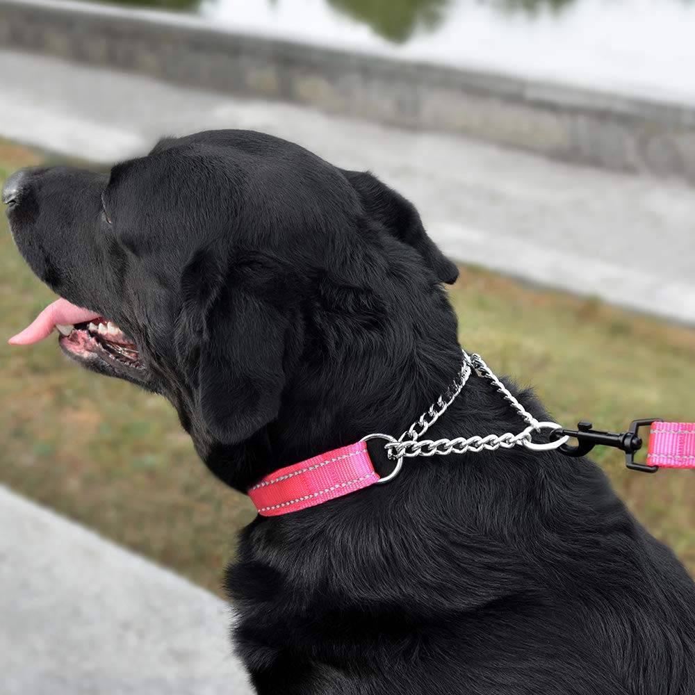 Ошейники для собак: какие бывают и как выбрать?