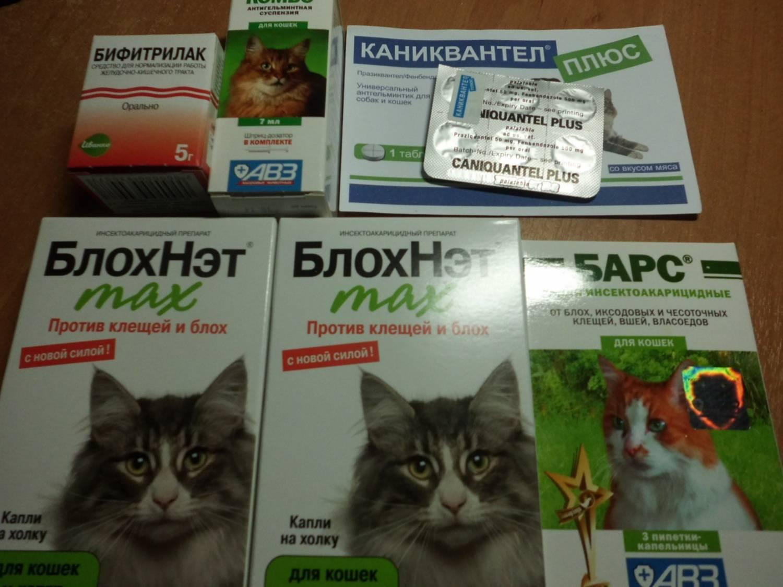 Каниквантел плюс для кошек: инструкция по применению, отзывы, аналоги, меры предосторожности