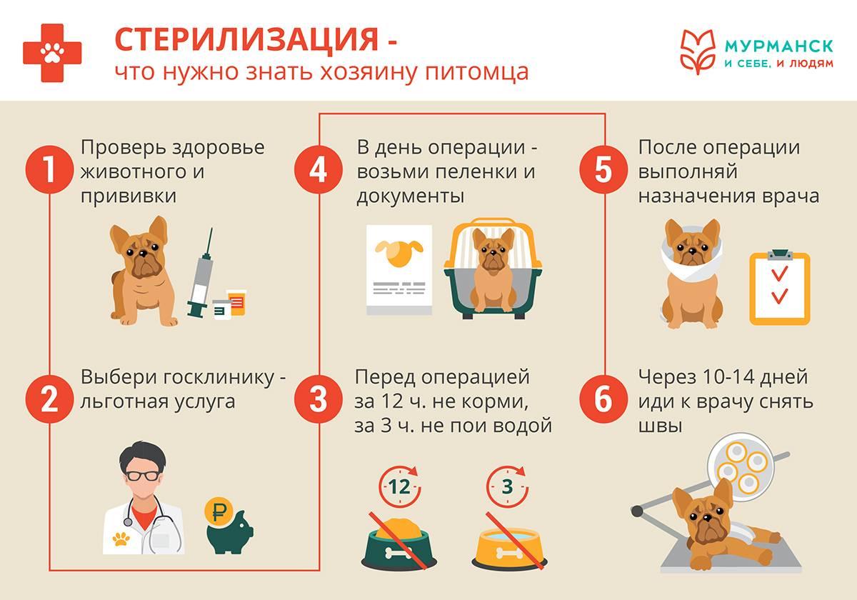 Когда можно гулять с щенком после первой и второй прививки?