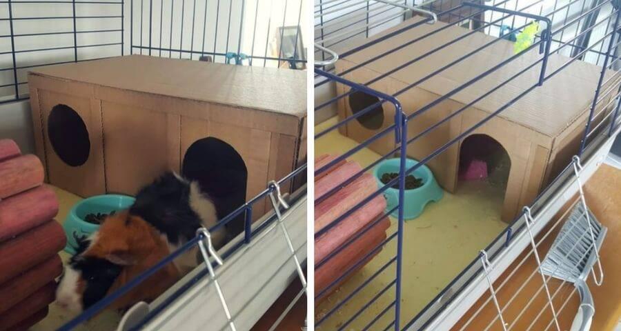 Игрушки для морских свинок своими руками: лестница, качели, лабиринт, сенник