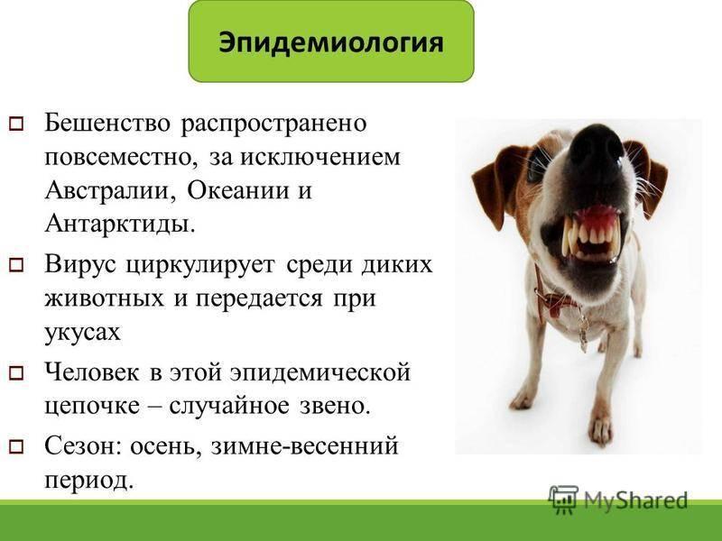 Болезнь межпозвонковых дисков у собак