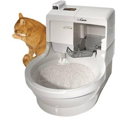 5 лучших закрытых туалетов для кошек