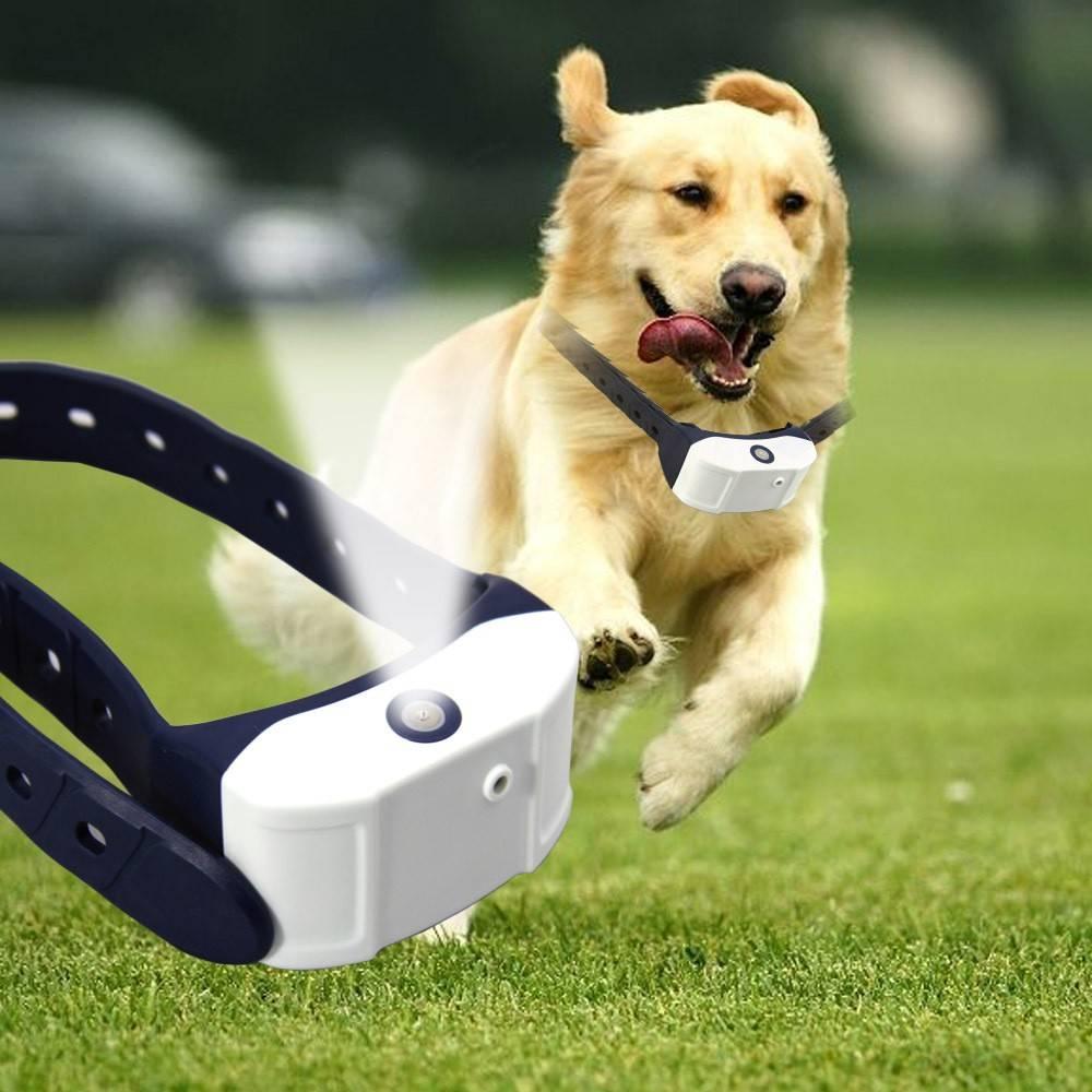 7 лучших электроошейников для собак - рейтинг 2021