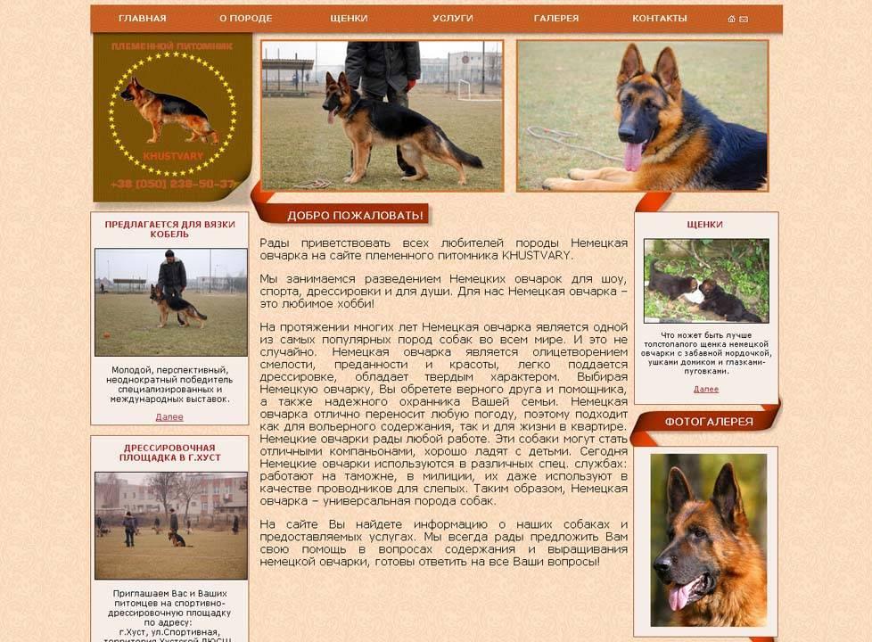 ᐉ как отличить овчарку от дворняжки? - zoomanji.ru