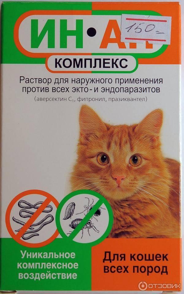 Капли от блох: рейтинг эффективных препаратов для кошек
