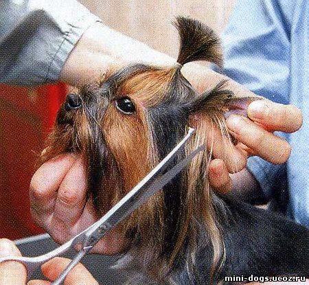 Можно ли собаке стричь усы?  - животные и растения - вопросы и ответы