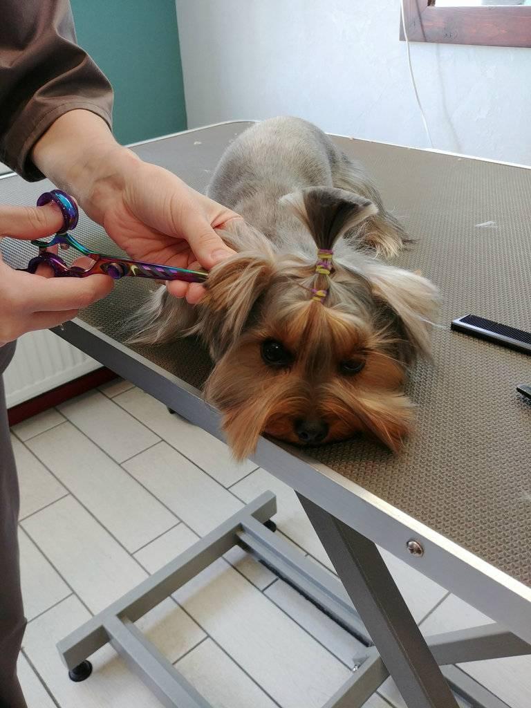 Стрижка собак (34 фото): как подстричь собаку в домашних условиях? инструменты и стол для стриппинга. как правильно стричь щенка ножницами? как называется расческа для тримминга?