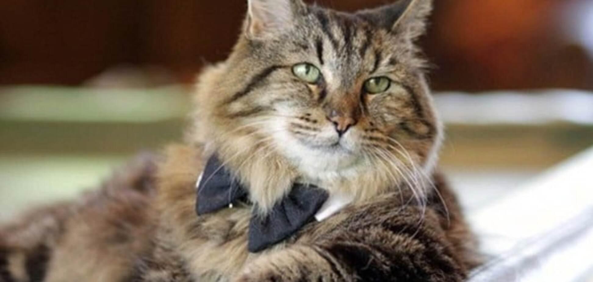 Седеют ли кошки? могут поседеть в старости?  - животные и растения - вопросы и ответы