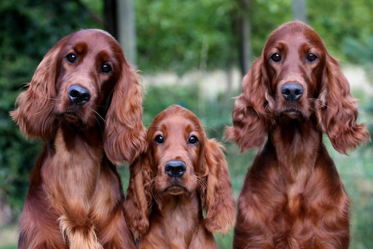 Эти породы собак теряются чаще других