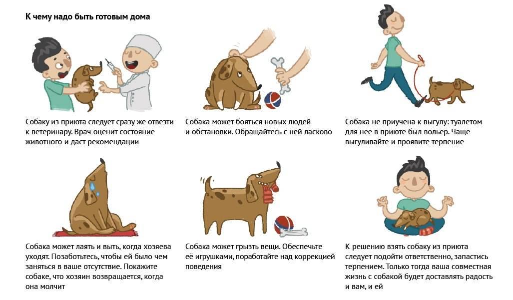 Приют для собак: чем вы можете помочь? советы специалиста!
