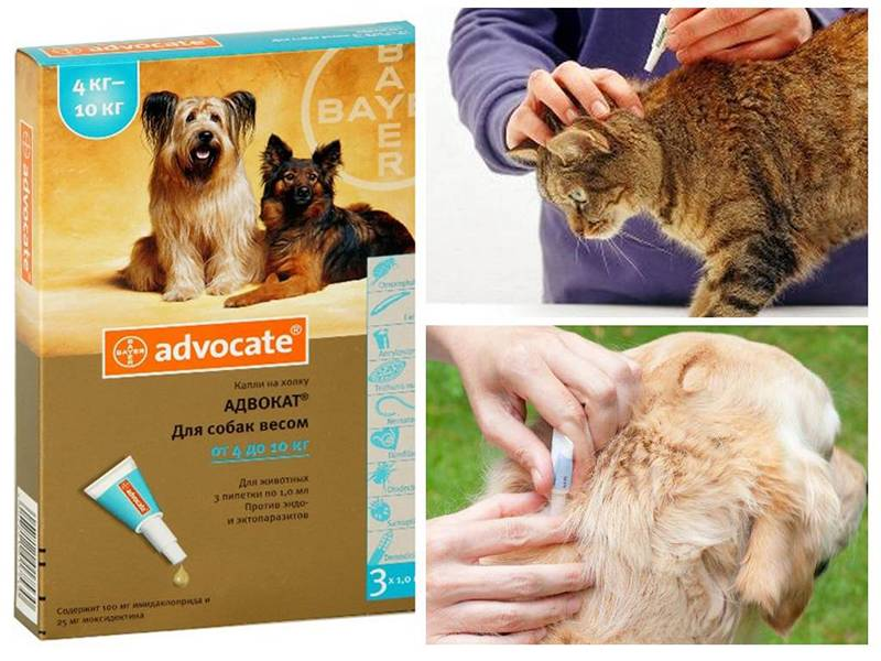 Инструкция по применению препарата «адвокат»: капли на холку от блох, клещей, глистов и других паразитов для кошек