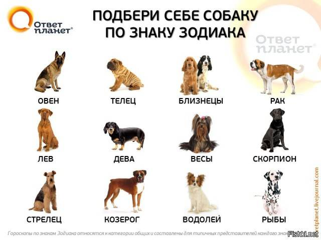 Какую породу собаки нужно выбрать согласно знаку зодиака хозяина