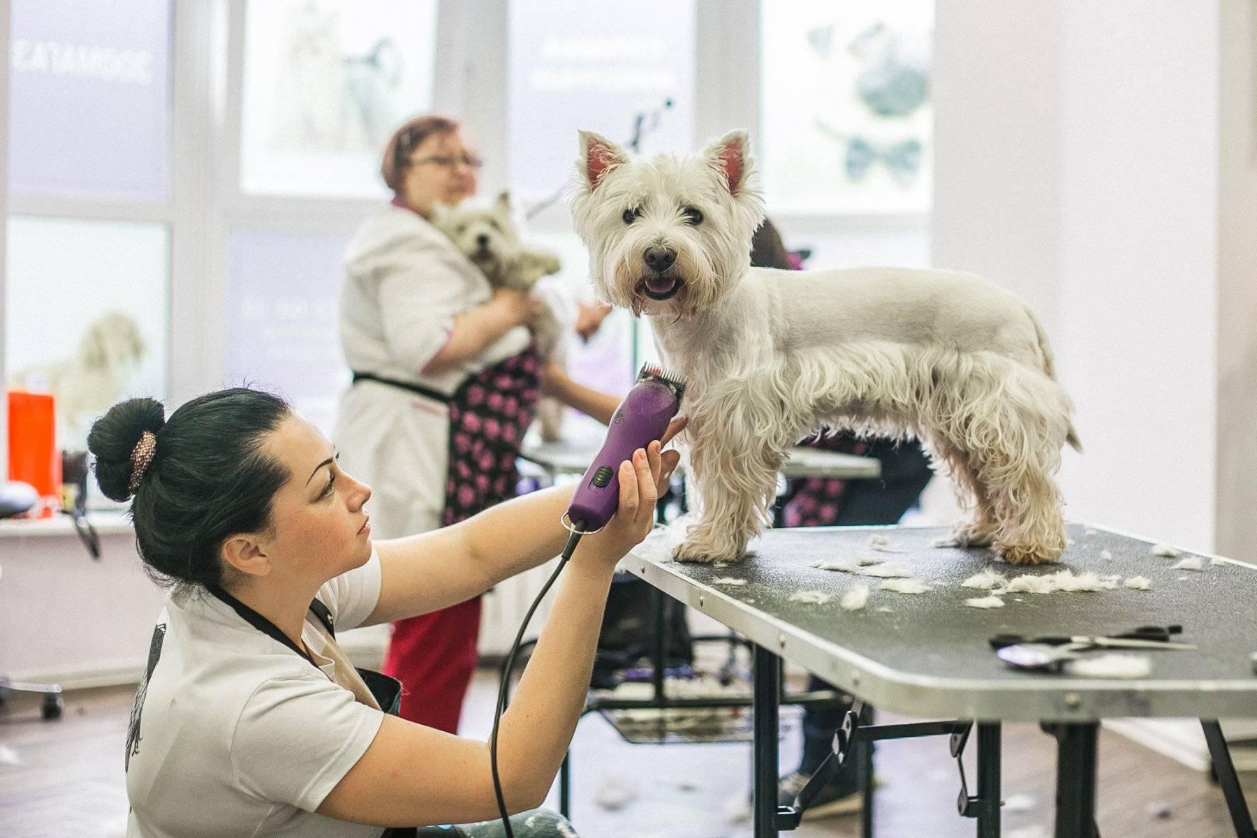 Десять причин, по которым собачья стрижка дороже человеческой – откровения профессионального грумера