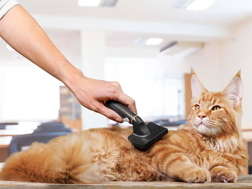 Как правильно ухаживать за котенком в домашних условиях
