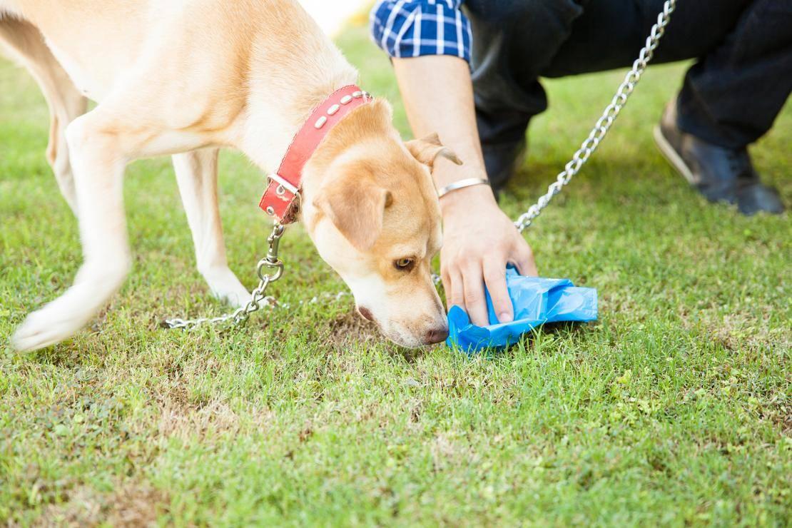 Почему собака метит территорию