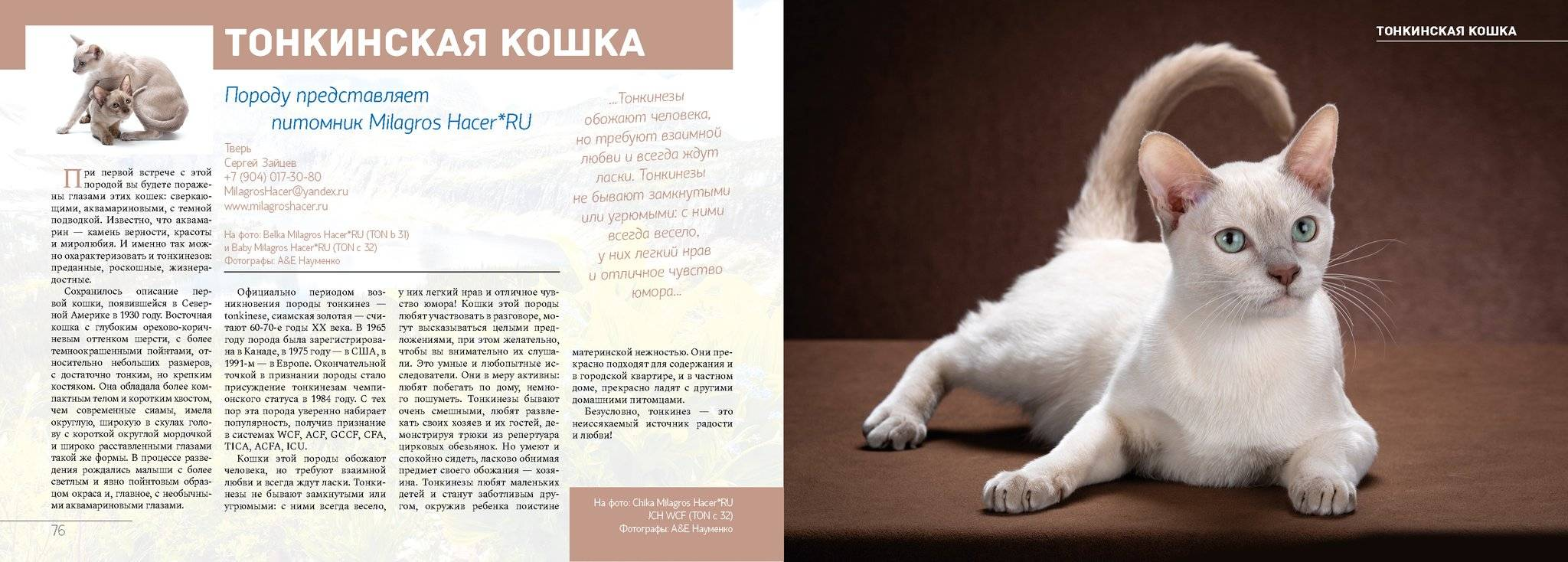 Самые умные породы кошек в мире – топ-10 питомцев с высоким уровнем интеллекта