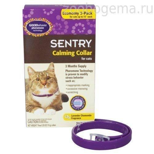 Лучшее успокоительное для кошки: обзор, особенности, отзывы