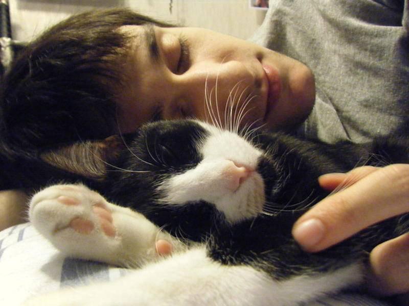 Почему коты любят спать со своими хозяевами?