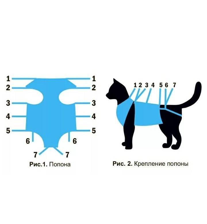 Описание различных видов попон для кошки, как изготовить самостоятельно и одеть