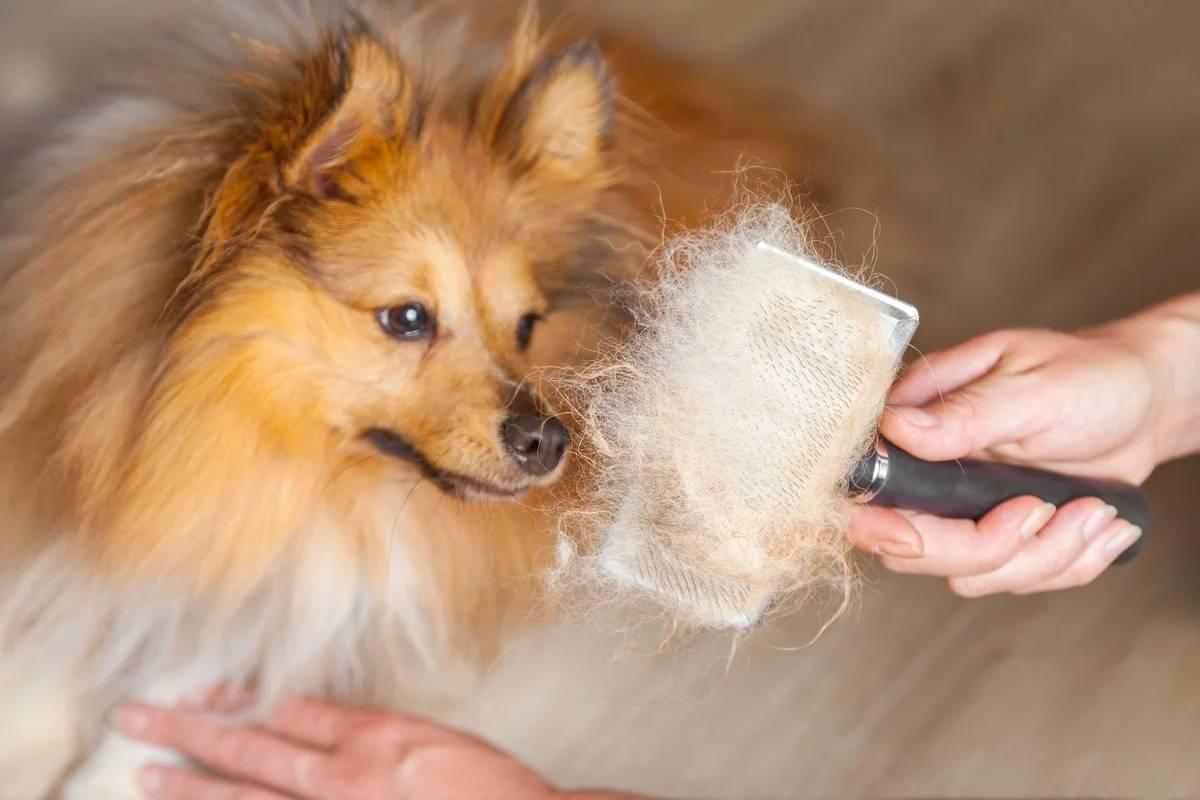 Собака линяет – что делать?