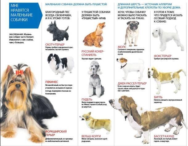 Пород собак, для содержания в квартире. советы собаководов