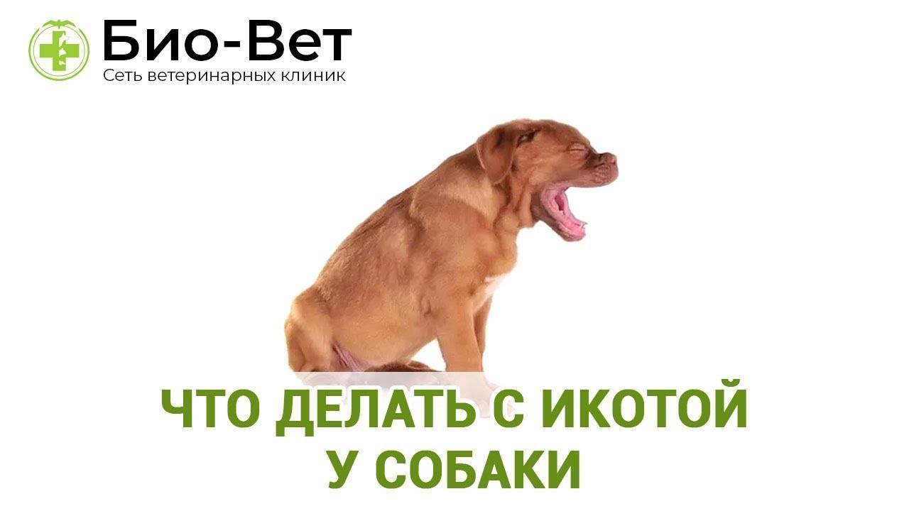 Собака чихает и фыркает: причины и методы лечения, что делать