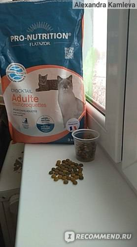 Wildcat - корм для кошек | отзывы, цена, состав, купить