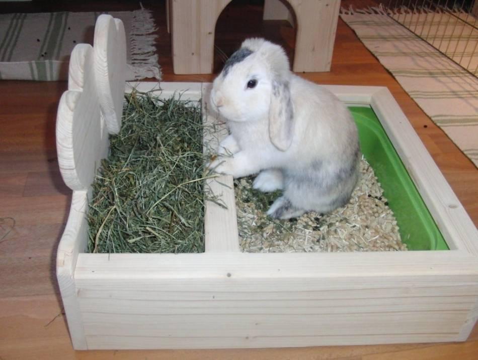 Порядок приучения декоративного кролика ходить в туалет на лоток в квартире